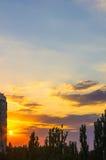 Ajardine com luz dramática Fotos de Stock Royalty Free