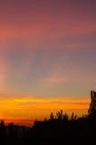 Ajardine com luz dramática Fotografia de Stock Royalty Free