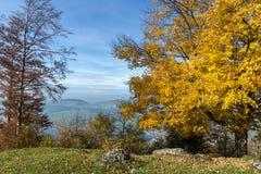 Ajardine com a montagem próxima Rigi da árvore amarela, cumes Foto de Stock