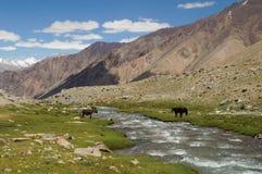 Ajardine com montanha, rocha e córrego em Ladakh, Índia Fotografia de Stock Royalty Free