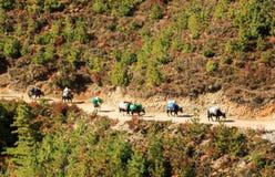 Ajardine com montanhas altas e caravana dos bois em Himalaya Imagens de Stock Royalty Free