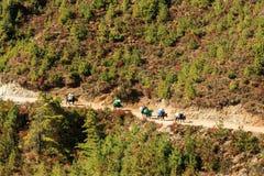 Ajardine com montanhas altas e caravana dos bois em Himalaya Foto de Stock Royalty Free