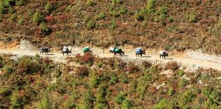 Ajardine com montanhas altas e caravana dos bois em Himalaya Imagens de Stock