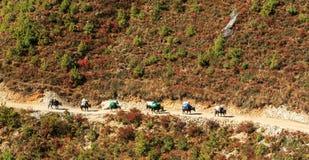Ajardine com montanhas altas e caravana dos bois em Himalaya Fotografia de Stock Royalty Free