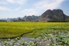 Ajardine com montanhas, campos do arroz e rio Fotografia de Stock