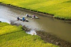 Ajardine com montanhas, campos do arroz e rio Imagem de Stock Royalty Free