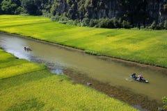 Ajardine com montanhas, campos do arroz e rio Foto de Stock
