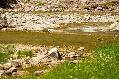 Ajardine com montanhas e um rio na parte dianteira Imagem de Stock Royalty Free