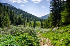 Ajardine com montanhas, floresta e arbustos na parte dianteira Cenário bonito Fotos de Stock