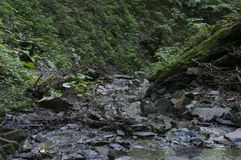 Ajardine com montanhas, floresta e um rio Imagens de Stock