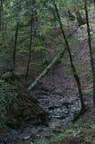 Ajardine com montanhas, floresta e um rio Fotos de Stock