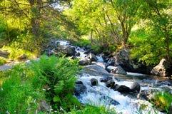 Ajardine com montanhas, floresta e um rio na parte dianteira Fotografia de Stock Royalty Free