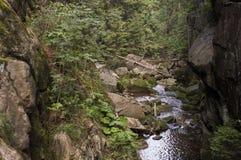 Ajardine com montanhas, floresta e um rio no Polônia Foto de Stock Royalty Free