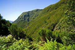 Ajardine com montes e floresta, Madeira, Portugal Fotografia de Stock