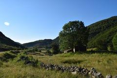 ajardine com montes e o céu verde do floresta e o azul Imagens de Stock