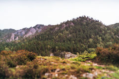Ajardine com moutains e floresta, opinião do tiltshift Foto de Stock
