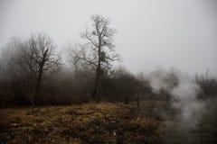 Ajardine com névoa bonita na floresta no monte ou arraste através de uma floresta misteriosa do inverno com as folhas de outono n Imagem de Stock Royalty Free