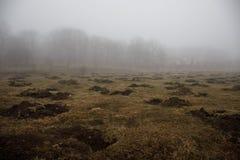 Ajardine com névoa bonita na floresta no monte ou arraste através de uma floresta misteriosa do inverno com as folhas de outono n Imagens de Stock Royalty Free