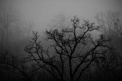 Ajardine com névoa bonita na floresta no monte ou arraste através de uma floresta misteriosa do inverno com as folhas de outono n Fotos de Stock Royalty Free
