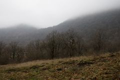 Ajardine com névoa bonita na floresta no monte ou arraste através de uma floresta misteriosa do inverno com as folhas de outono n Fotografia de Stock