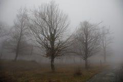 Ajardine com névoa bonita na floresta no monte ou arraste através de uma floresta misteriosa do inverno com as folhas de outono n Fotos de Stock