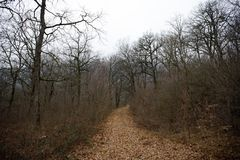 Ajardine com névoa bonita na floresta no monte ou arraste através de uma floresta misteriosa do inverno com as folhas de outono n Imagens de Stock