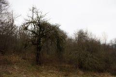 Ajardine com névoa bonita na floresta no monte ou arraste através de uma floresta misteriosa do inverno com as folhas de outono n Fotografia de Stock Royalty Free