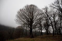 Ajardine com névoa bonita na floresta no monte ou arraste através de uma floresta misteriosa do inverno com as folhas de outono n Foto de Stock Royalty Free
