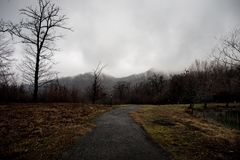 Ajardine com névoa bonita na floresta no monte ou arraste através de uma floresta misteriosa do inverno com as folhas de outono n Imagem de Stock