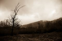 Ajardine com névoa bonita na floresta no monte ou arraste através de uma floresta misteriosa do inverno com as folhas de outono n Foto de Stock
