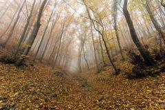 Ajardine com névoa na floresta amarela e na ponte de madeira, montanha de Vitosha, Bulgária Imagem de Stock Royalty Free