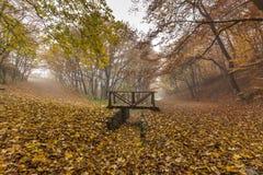Ajardine com névoa na floresta amarela e na ponte de madeira, montanha de Vitosha, Bulgária Imagens de Stock Royalty Free
