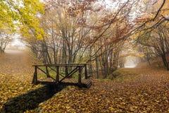 Ajardine com névoa na floresta amarela e na ponte de madeira, montanha de Vitosha, Bulgária Foto de Stock