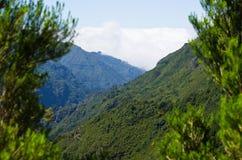 Ajardine com nuvens de rastejamento, Madeira, Portugal Imagem de Stock