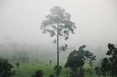 Ajardine com nuvens e névoa sobre os montes cobertos nas florestas Fotografia de Stock
