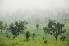 Ajardine com nuvens e névoa sobre os montes cobertos nas florestas Fotos de Stock Royalty Free