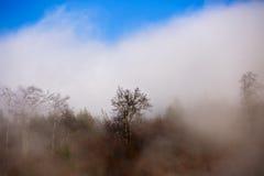 Ajardine com nuvens e névoa sobre os montes cobertos nas florestas dentro Fotografia de Stock