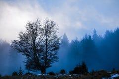 Ajardine com nuvens e névoa sobre os montes cobertos nas florestas dentro Fotografia de Stock Royalty Free