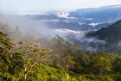 Ajardine com nuvens, selvas, montanhas e colha Andes, Ecuad Imagens de Stock Royalty Free