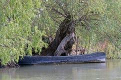 Ajardine com o barco velho no delta de Danúbio Imagens de Stock Royalty Free