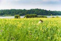 Ajardine com o cão que joga no prado de flores do amarelo da flor Fotografia de Stock