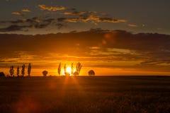 Ajardine com o céu alaranjado do por do sol sobre arquivado e árvores Foto de Stock Royalty Free