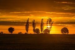 Ajardine com o céu alaranjado do por do sol sobre arquivado e árvores Imagens de Stock Royalty Free
