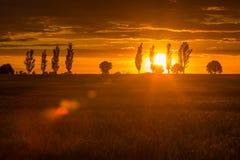 Ajardine com o céu alaranjado do por do sol sobre arquivado e árvores Foto de Stock