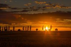 Ajardine com o céu alaranjado do por do sol sobre arquivado e árvores Fotografia de Stock Royalty Free