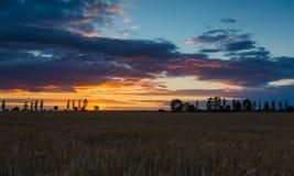 Ajardine com o céu alaranjado do por do sol sobre arquivado e árvores Imagem de Stock Royalty Free