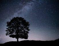 Ajardine com o céu estrelado da noite e a silhueta da árvore no monte Via Látea com árvore só, estrelas de queda Fotografia de Stock