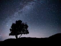 Ajardine com o céu estrelado da noite e a silhueta da árvore no monte Via Látea com árvore só, estrelas de queda Foto de Stock