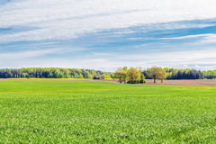 Ajardine com o céu, a floresta e o campo de cereal Fotografia de Stock Royalty Free