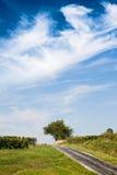 Ajardine com o céu na árvore e na estrada velha Imagem de Stock